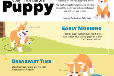 AKC Day In the Life of a Puppy Infographic